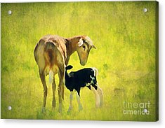 Spring Baby Acrylic Print by Darren Fisher