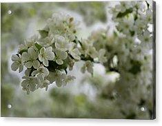 Spring Bloosom Acrylic Print by Sebastian Musial