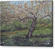Spring Cherry Blossoms Acrylic Print by Gregory Arnett