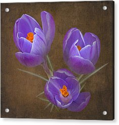 Spring Crocus Acrylic Print by Angie Vogel