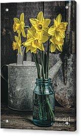 Spring Daffodil Flowers Acrylic Print by Edward Fielding