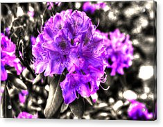 Spring Flowers Acrylic Print by Mark Alexander