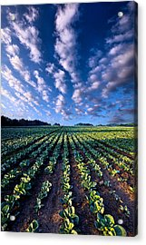 Spring Fresh Acrylic Print by Phil Koch