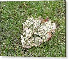 Spring Grass Growing Acrylic Print by Ann Horn