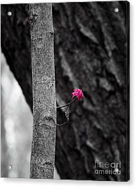 Spring Growth Acrylic Print by Steven Ralser