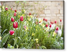 Spring Has Sprung Acrylic Print by Anne Gilbert
