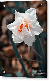 Spring Has Sprung Acrylic Print by Gerlinde Keating - Keating Associates Inc