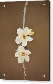 Spring In Bloom Acrylic Print by Kimberly Danner
