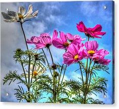 Spring In Full Swing Acrylic Print by Heidi Smith