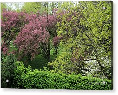 Spring In St. Louis Acrylic Print by Theresa Willingham