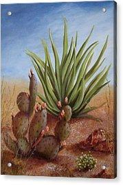 Spring In The Desert Acrylic Print by Roseann Gilmore