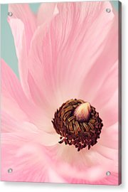 Spring Pink Acrylic Print by Amy Weiss