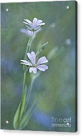 Spring Romance Acrylic Print by Maria Ismanah Schulze-Vorberg