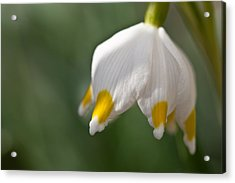 Spring Snowflake Acrylic Print by Andreas Levi
