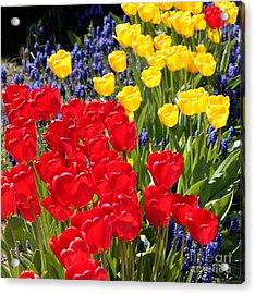 Spring Sunshine Acrylic Print by Carol Groenen