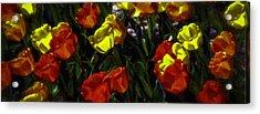 Spring Sunshine Acrylic Print by F Leblanc