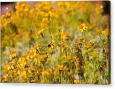 Spring Acrylic Print by Tammy Espino