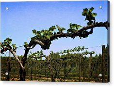 Spring Vineyard Acrylic Print by Michelle Calkins