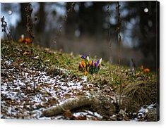 Spring Vs Winter Acrylic Print by Oleksandr Maistrenko