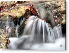 Springing Forward Acrylic Print by JC Findley