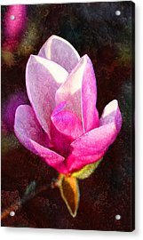 Spring's Promise Acrylic Print by Pamela Gail Torres