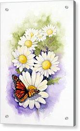 Springtime Daisies  Acrylic Print by Brett Winn