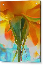 Spring In Summer Acrylic Print by Brooks Garten Hauschild