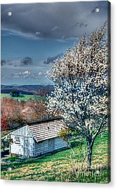 Springtime In The Blue Ridge Mountains I Acrylic Print by Dan Carmichael