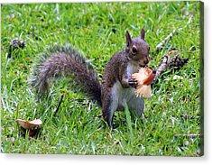 Squirrel Eats Mushroom Acrylic Print by Kim Pate