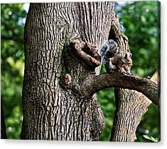 Squirrel Guarding Watering Knot Acrylic Print by Chris Flees