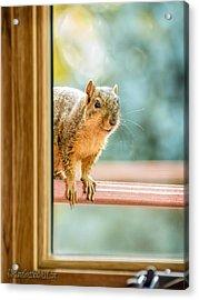 Squirrel In The Window Acrylic Print by LeeAnn McLaneGoetz McLaneGoetzStudioLLCcom