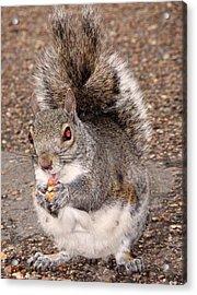 Squirrel Possessed Acrylic Print by Rona Black