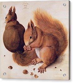 Squirrels Acrylic Print by Albrecht Duerer