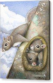 Squirrels Acrylic Print by Wayne Hardee