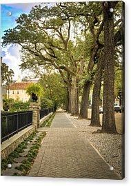 St Charles Live Oak Trees Acrylic Print by Ray Devlin