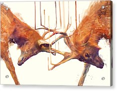 Stags // Strong Acrylic Print by Amy Hamilton