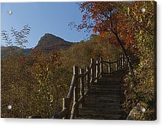 Stairway To The Top Acrylic Print by Qing