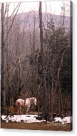 Stallion In The Mountain Pasture Acrylic Print by Patricia Keller