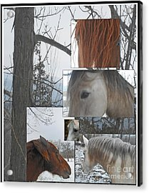 Stallions Collage There Is A Connection Acrylic Print by Patricia Keller