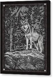 Standing Tall Acrylic Print by Ernie Echols