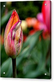 Standout Acrylic Print by Rona Black