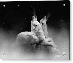 Star Talkers Acrylic Print by Robert Foster