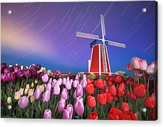 Star Trails Windmill And Tulips Acrylic Print by William Lee