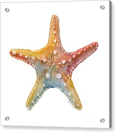 Starfish Acrylic Print by Amy Kirkpatrick
