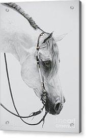 Sterling Acrylic Print by Joni Beinborn