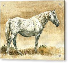 Sterling Wild Stallion Of Sand Wash Basin Acrylic Print by Linda L Martin
