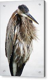 Stern - # 9 Acrylic Print by Paulette Thomas
