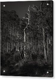 Still Standing Acrylic Print by Mario Celzner