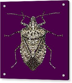 Stink Bug Bedazzled Acrylic Print by R  Allen Swezey