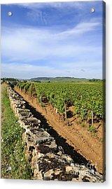 Stone Wall. Vineyard. Cote De Beaune. Burgundy. France. Europe Acrylic Print by Bernard Jaubert